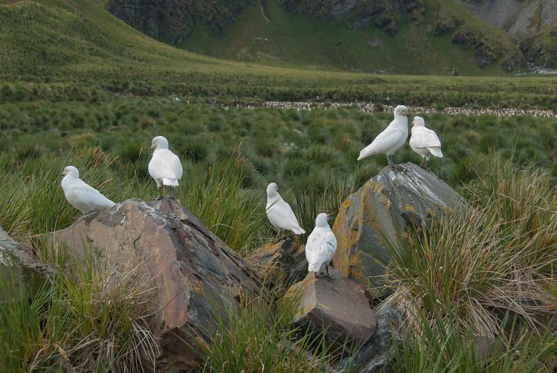 Birds in Moltke Harbor, South Georgia Island