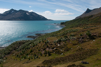 Scenery at the Stromness Bay, South Georgia Island