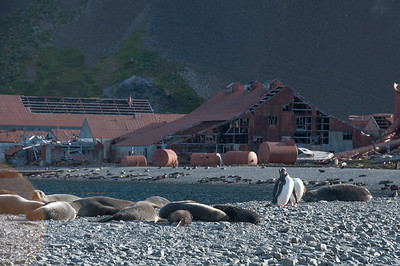 Former whaling station at Stromness Bay