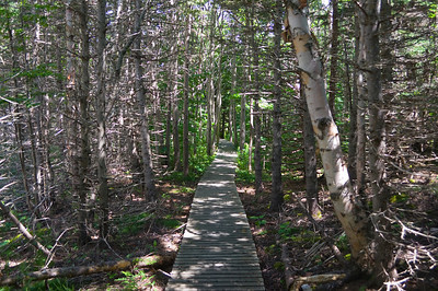 The boardwalk continues through the forest ...