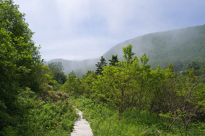 Continuing back along the boardwalk. The brook is now on the right.