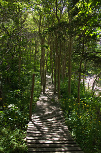 The boardwalk is cleverly built amongst the trees. The brook is visible on the right.