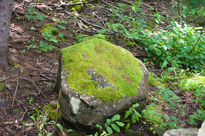 A rock covered in moss and lichen, encounted in the forest along the boardwalk.