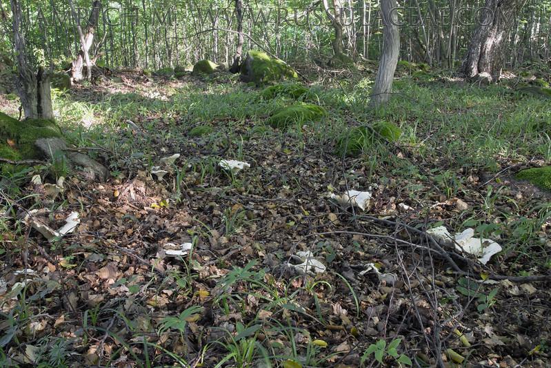 Lactifluus vellereus - rýdzik plstnatý