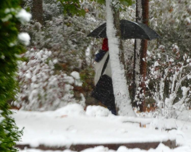 the snowbrella