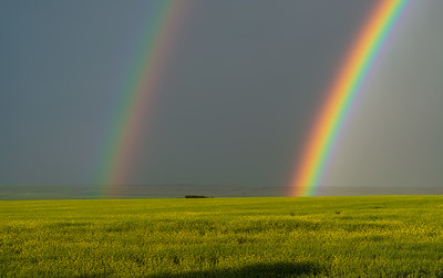 Double Rainbow over Canola Field