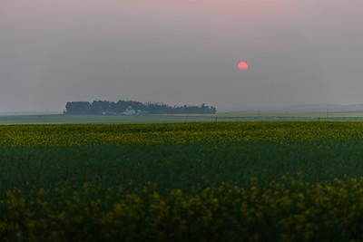 Smoky Sunset over Canola Field