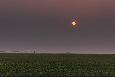 Smoky Sunrise over Canola Field