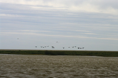 Geese, salt marsh, and James Bay in the background.