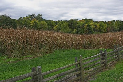 Fence, corn, trees