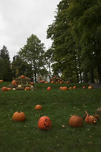 Carved Pumpkin Display