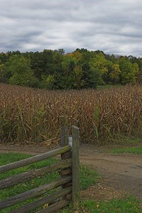 Fencepost, corn, trees