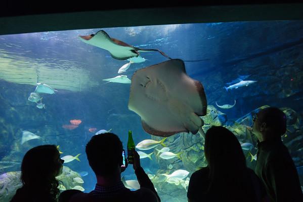 Ripley's Aquarium 2016