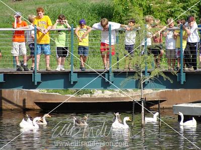 duck pond 2576