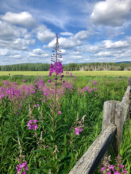 Photo Credit: Amy Reed Geiger/Explore Fairbanks
