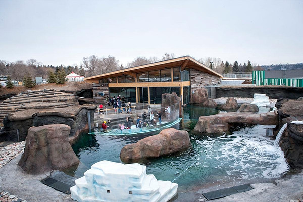 Valley Zoo Arctic Shores