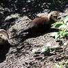 North American River Otter Babies<br /> Edmonton Valley Zoo<br /> Photographer: Jesse Popowicz<br /> July 2011