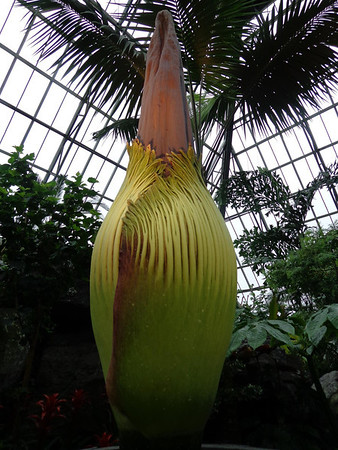 Photo: April 19, 2013 <br /> <br /> Putrella only grew one single cm last night, putting her at 224.5cm.