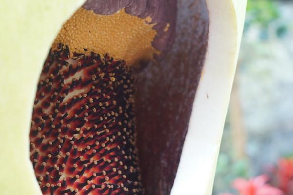 Photo: April 23, 2013<br /> <br /> Putrella's Pollen