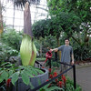 "Photo: April 18, 2013<br /> <br /> Putrella grew less that 1"" last night and stands at 7'4"" (or 223.5 cm). <br /> <br /> Slowed growth rate is a good indication of an impending bloom."