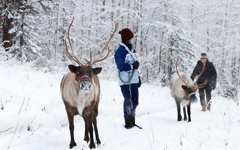 Photo Credit: Running Reindeer Ranch
