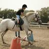 Whitemud Equine Centre