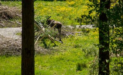Elgtun- Fra vandringen i skogen