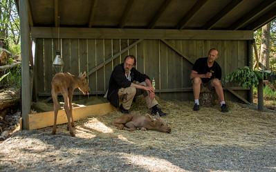 Elgtun - kalvene har egen plass der de boltrer seg