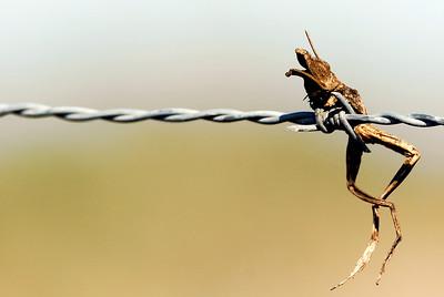 Evidence of a Loggerhead Shrike