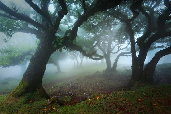 REF006 - Au milieu des Arbres par Antonio GAUDENCIO Auteur Photographe