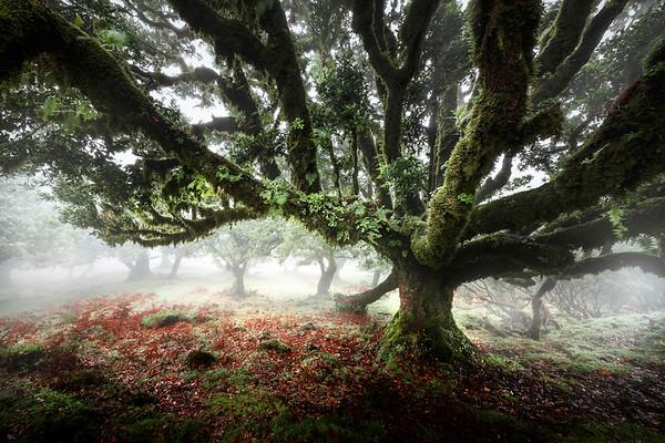 REF007 - Au milieu des Arbres par Antonio GAUDENCIO Auteur Photographe