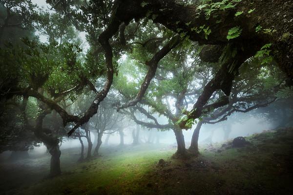 REF005 - Au milieu des Arbres par Antonio GAUDENCIO Auteur Photographe