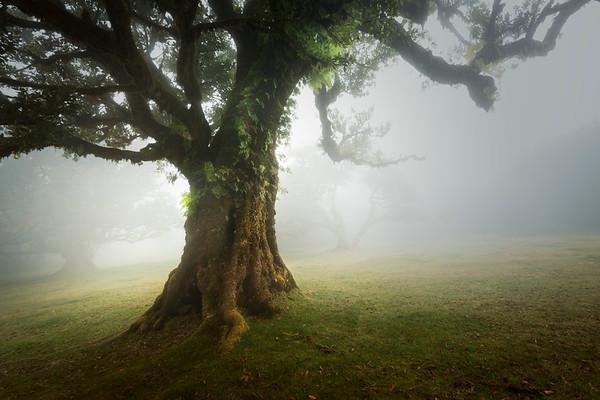 REF009 - Au milieu des Arbres par Antonio GAUDENCIO Auteur Photographe