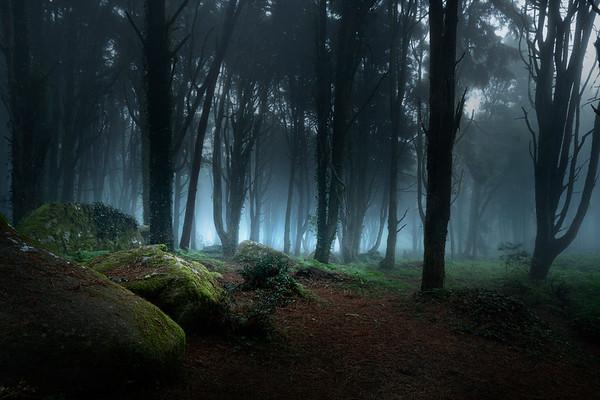 REF002 - Au milieu des Arbres par Antonio GAUDENCIO Auteur Photographe