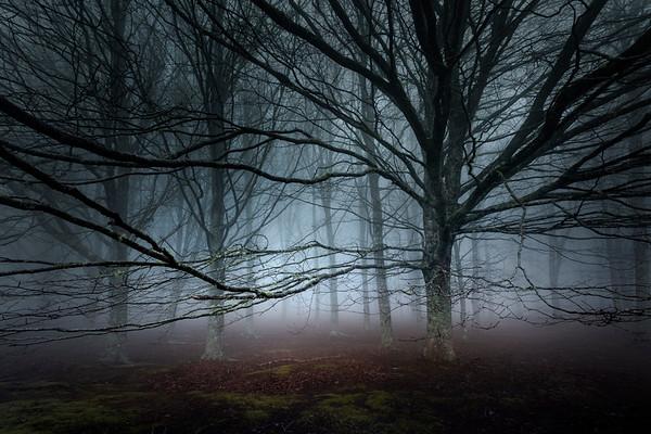 REF004 - Au milieu des Arbres par Antonio GAUDENCIO Auteur Photographe