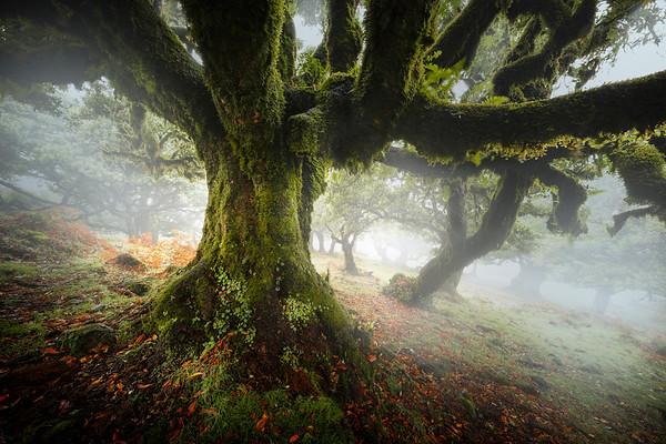 REF008 - Au milieu des Arbres par Antonio GAUDENCIO Auteur Photographe