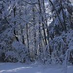 Auburn NH Winter Wonderland 101