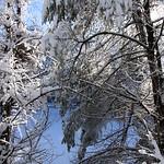 Auburn NH Winter Wonderland 89