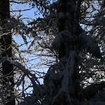 Auburn NH Winter Wonderland 37