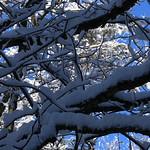 Auburn NH Winter Wonderland 49