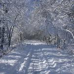 Auburn NH Winter Wonderland 76