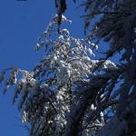 Auburn NH Winter Wonderland 56