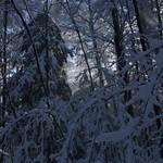 Auburn NH Winter Wonderland 104
