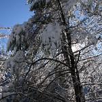 Auburn NH Winter Wonderland 88