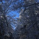 Auburn NH Winter Wonderland 52