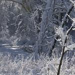Auburn NH Winter Wonderland 26