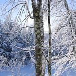 Auburn NH Winter Wonderland 83