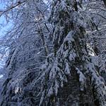 Auburn NH Winter Wonderland 42