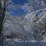 Auburn NH Winter Wonderland 65