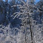 Auburn NH Winter Wonderland 31
